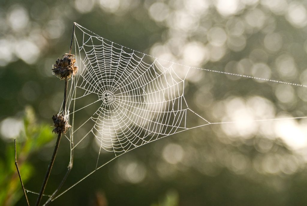 Picture of WEB-2 by Anita Ritenour is licensed under CC BY-NC 2.0